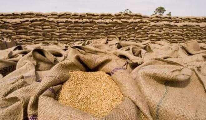 رواں مالی سال 2017-18ء کے پہلے گیارہ ماہ کے دوران گندم کی برآمدات میں ..