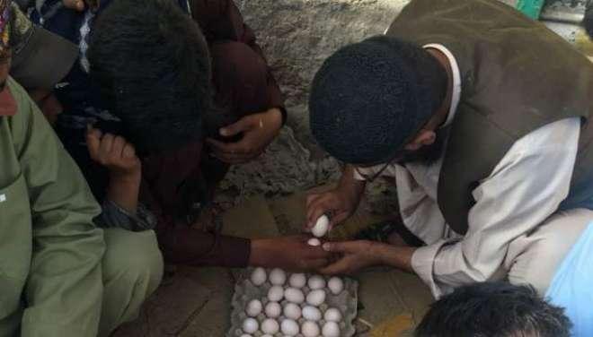 کوئٹہ میں عید کے موقع پر انڈے لڑوائے جانے کاروایتی کھیل کھیلا گیا