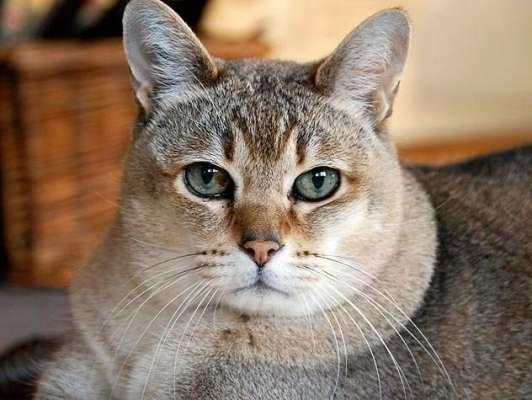 جانوروں کے ڈاکٹر طالب علم نے اپنے گھر کو بلیوں کے ہوٹل میں بدل  دیا