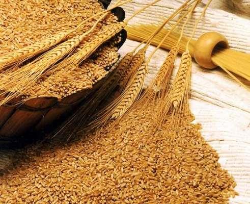 اسسٹنٹ کمشنر رائے ونڈ کا خریداری مرکز گندم کا دورہ ،
