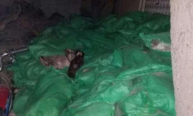 کراچی سے برآمدہونے والی کتوں اورگدھوں کی کھا لیں چین بھیجی جانی تھیں،تفتیشی ..