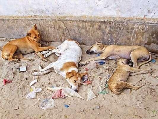 سوات،مینگورہ شہر میں کتے کے گوشت کے فروخت کا انکشاف ، پولیس نے ملزم ..