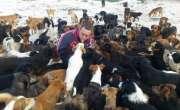 یہ رحم دل شخص  750 سے زیادہ کتوں کی دیکھ بھال کرتا ہے