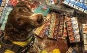 تمباکو کے سمگلروں نے کتے کے سر کی قیمت 45 لاکھ روپے مقرر کر دی