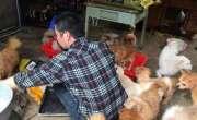 دو سالوں میں تین سو کتوں کو اپنانے والا بھاری رقم کا مقروض ہوگیا