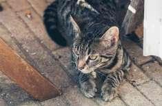 سپیشل ایجنٹ بلی جو ساتھیوں کو فرار کروانے میں ماہر ہے