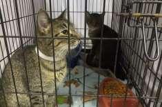 شہریوں  نے رقم کی بجائے بلیوں کی خوراک کی صورت میں پارکنگ چالان ادا ..