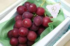 روبی رومن ۔ دنیا بھر میں انگوروں کی سب سے مہنگی قسم