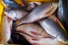 گزششتہ سال مچھلی اور اس کی مصنوعات کی برآمدات میں 4.92فیصد اضافہ