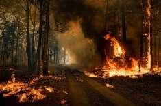 آسٹریلیا کے جنگلات میں لگنے والی آگ سے زخمی ہونے والوں کی تعداد 120 ..
