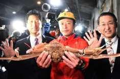 جاپان میں برفانی کیکڑا تقریباً 72 لاکھ روپے میں نیلام ہوا