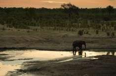 زمبابوے میں خشک سالی کے باعث 55 ہاتھی ہلاک
