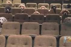 تربیت کے لیے کتوں کی لائیو میوزیکل شو میں شرکت۔ تصویر وائرل ہوگئی