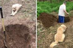 Dog looks on as his grave is dug but then the vet changed the diagnosis