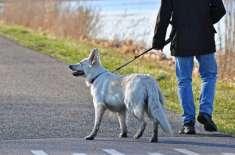 ایک کمپنی  ڈی این اے ٹسٹ سے فضلہ پھیلانے والے کتوں کے مالک کو پکڑ رہی ..
