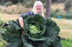 Australian couple harvest human-sized cabbage