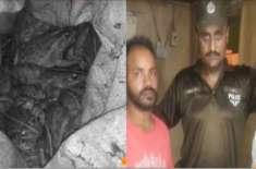 لاہور پولیس نے رکشا سے پانچ من مردہ مینڈک برآمد کرکے دو ملزمان کو حراست ..
