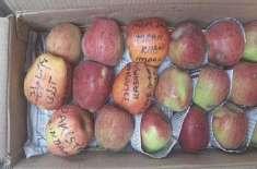 کشمیریوں نے سیبوں پر نعرے لکھ کر بھارت بھیج دئیے