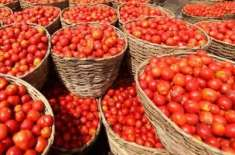 پشاور، مہنگے ٹماٹر بیچنے والوں کیخلاف کارروائی، چھ افراد گرفتار