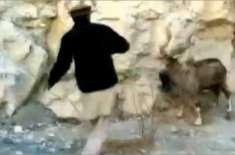 ہنزہ میں پاکستان کے قومی جانور مارخور کا شکار کرنے والے ملزم کو 6 ماہ ..