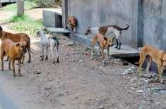نقصان پہنچانے والے آوارہ کتوں کو مارنا شرعا ًدرست ہے ،ْفتویٰ کونسل