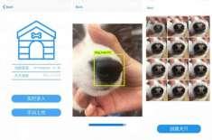 چینی سٹارٹ اپ نے ایسی ایپ تخلیق کر لی جو گمشدہ کتوں  کی ناک کی تصاویر ..