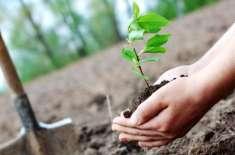 اوپن یونیورسٹی میں موسم بہار کی شجر کاری مہم کا آغاز