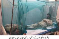سیالکوٹ کی تحصیل پسرور کے دو نوجوانوں میں ڈینگی وائرس کی تصدیق،علامہ ..