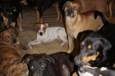 سمندری طوفان ڈوریان  کے  دوران ایک خاتون نے اپنے گھر کے دروازے 97 کتوں ..