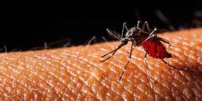 کراچی، کورونا کے بعد ڈینگی وائرس میں بھی جینیاتی تبدیلی کا انکشاف