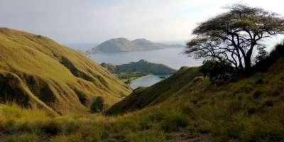 انڈونیشیا کا یہ جزیزہ ممالیہ کو چھوٹا بنا دیتا ہے
