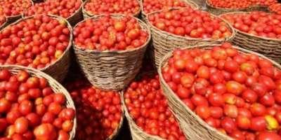 آئندہ دو ہفتوں کے دوران سندھ سے ٹماٹر کی سپلائی کا آغاز ہونے سے مارکیٹ ..