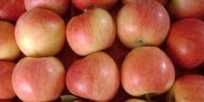جاپان سے سیبوں کی برآمدات 31 ہزار ٹن سے متجاوز