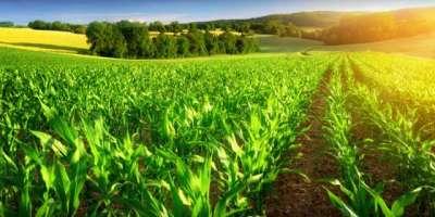 حکومت پنجاب صوبہ کو ہر قسم کی فصل میں خود کفیل بنانے کی پالیسی پر کاربند ..