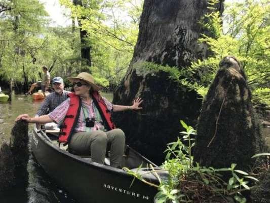 سائنسدانوں نے شمالی کیرولائنا میں اہراموں سے بھی قدیم درخت دریافت ..