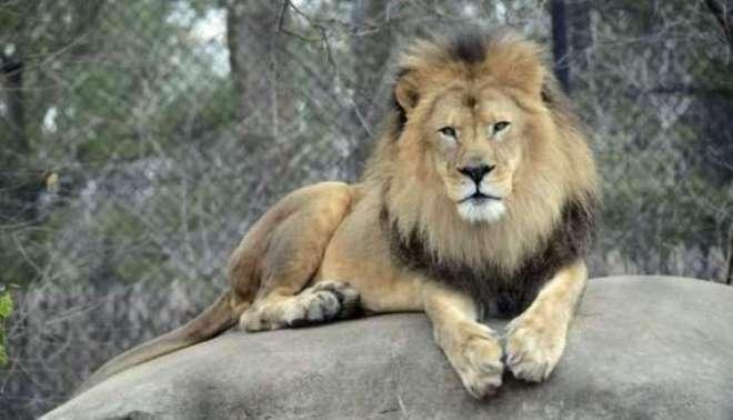 اجرت مانگنے پر لاہور کی امام بارگاہ کے نگراں نے مزدور پر شیر چھوڑ دیا