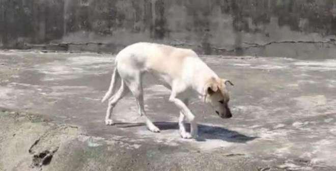 چڑیا گھر میں بھیڑیے  کے پنجرے میں کتا۔ دھوکہ دہی کے الزام پر  انتظامیہ ..