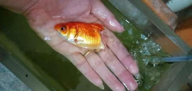 خاتون کی تیمارداری نے مچھلی کا آدھا جسم سڑنے کے باوجود اسے زندہ بچا ..