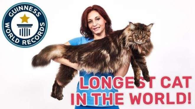 گینیز ورلڈ ریکارڈ نے اطالوی جوڑے کی بلی  کو دنیا کی سب سےلمبی بلی قرار ..