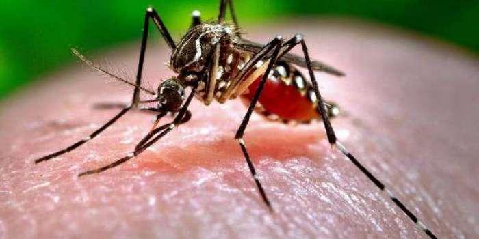 ڈینگی وائرس سے بچاؤ کیلئے عوام الناس کو بھی محکمہ صحت کے ساتھ مل کر اپنا کردارادا کرنا ہو گا تبھی ہم ان موذی بیماریوں سے محفوظ رہ سکیں گے