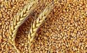 اوپن مارکیٹ میں گندم کی قیمت5 ماہ میں تقریباً 900 روپے فی من تک بڑھ گئی