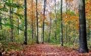 کورونا وائرس سے بچنے کے لیے روسی خاندان جنگل میں  رہنے لگا