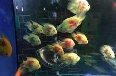 زندہ مچھلیوں پر لوگوں کے خاندانی نام لکھنے پر ایکوریم کی انتظامیہ کو ..