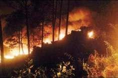 مری کے جنگلات میں شدید آگ بھڑک اُٹھی