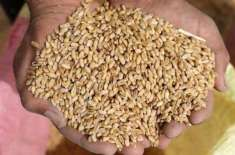 بحیرہ اسود ریجن کی گندم کی برآمد بڑھ کر 66 ملین ٹن رہنے کا امکان
