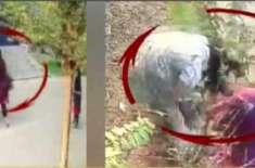فیصل آباد ملازمہ تشدد کیس، ملازمہ نے میرے بال کھینچے اس لیے اسے تشدد ..
