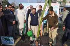 ممبر صوبائی اسمبلی نے پودا لگا کر شجرکاری مہم کا آغاز کردیا، شجر کاری ..