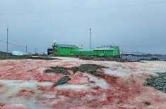 انٹارکٹکا  پر دیکھی گئی خونی برف کی تصاویر وائرل
