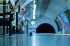ریلوے اسٹیشن پر چوہوں کی لڑائی کی تصویر سب سے بہترین قرار دے دی گئی