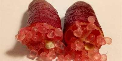 لیموں کی خاص اور سب سے مہنگی قسم ''فنگر لائم'' کی قیمت 30تا 45ہزار روپے ..